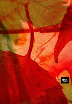 Fall in 100 (Really) Beautiful iPhone Wallpapers